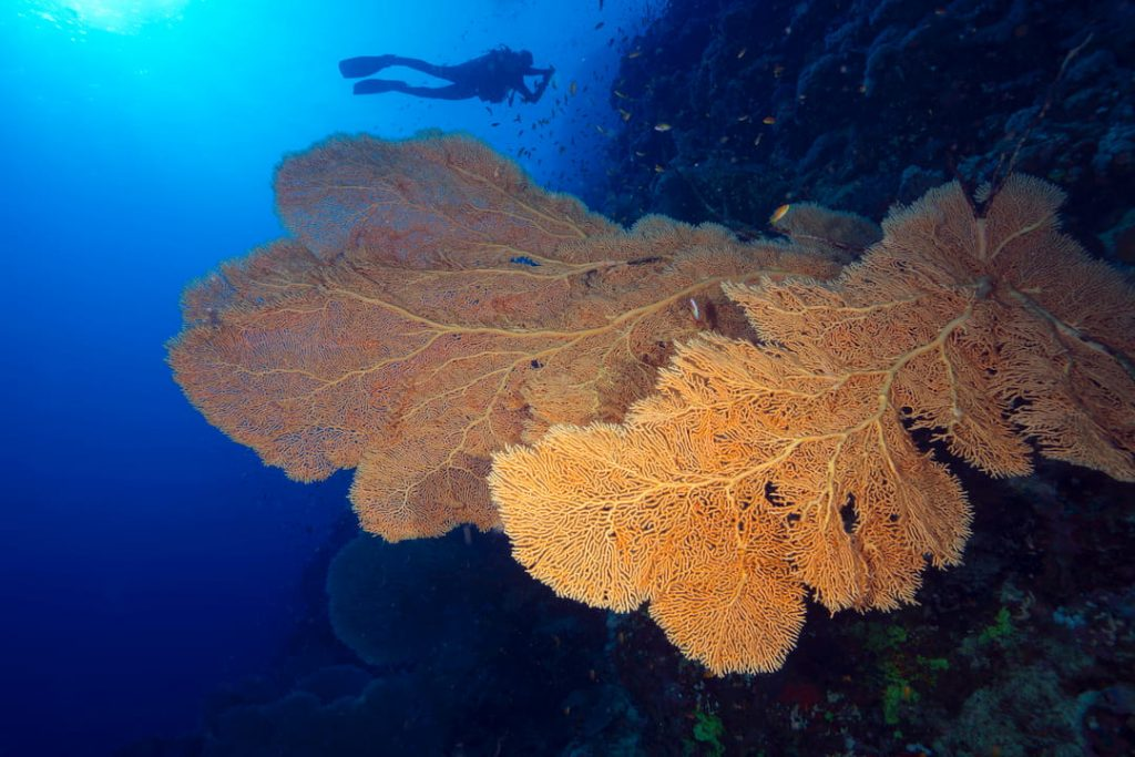 Brown coral reef Turkey Diving